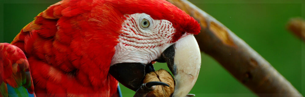 about-macaw-parrots