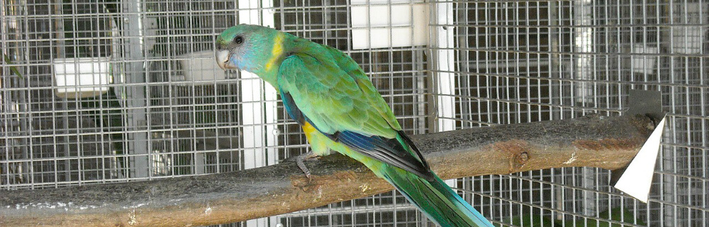 parrot-cages-maintenance-tips