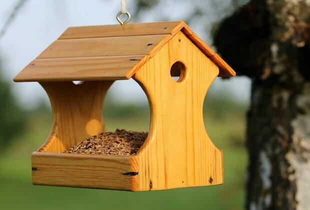 parrot-feed-bird-house-hanging
