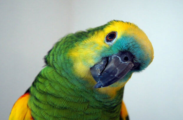 tips-for-parrot-owners